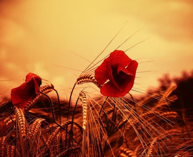 poppy-3215269_1920.jpg